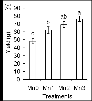photosynthesis rate 1