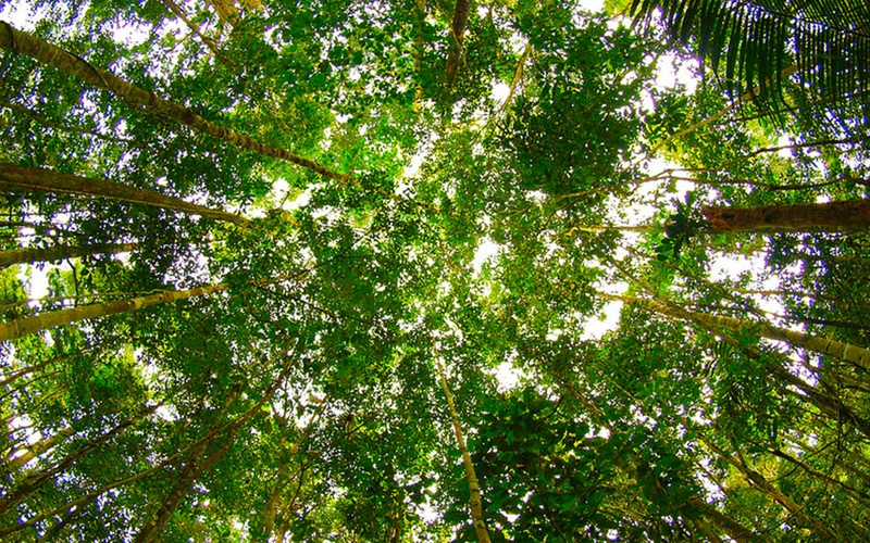 The Forest Canopy Structure Roles Measurement Tools For