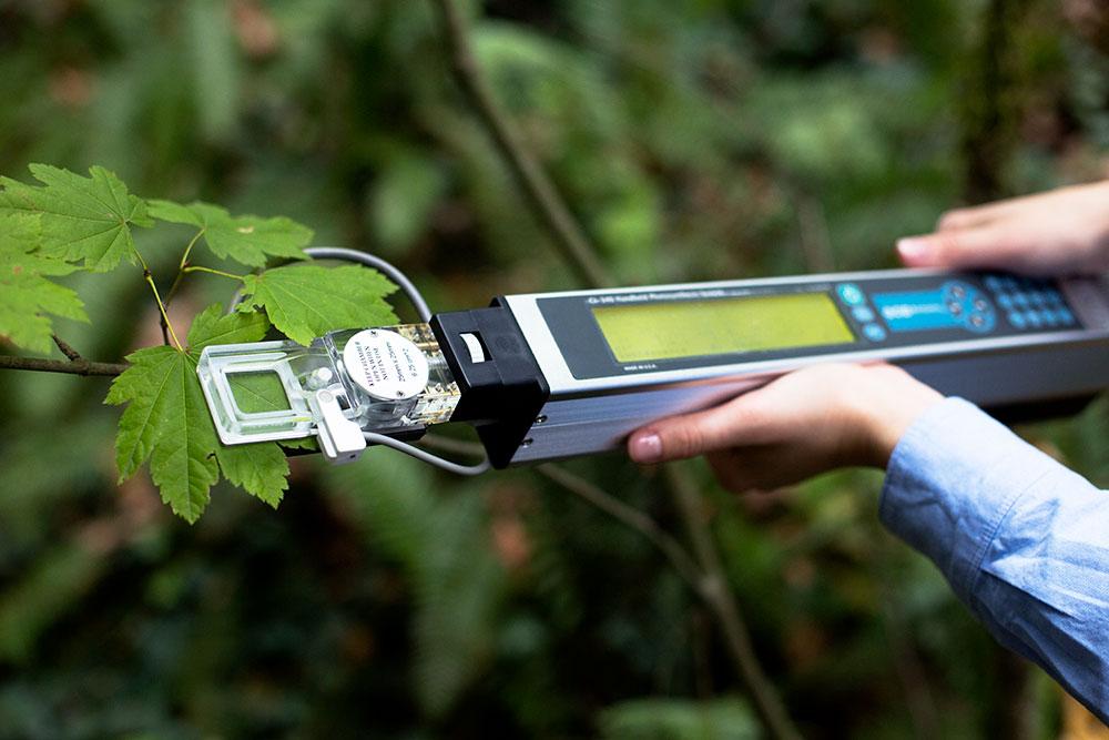 measuring transpiration in plants